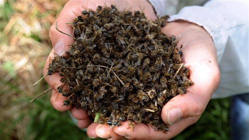 abeilles, catastrophe, avenir, enfer