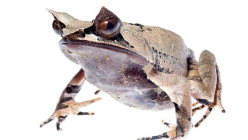 160 espèces nouvelles trouvées sur le pic de Malaisie - Light Years - CNN.com Blogs-063221.png