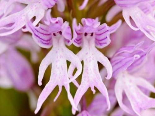 orchidee, visage, corps, troublant, plante, etrange